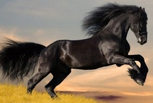 Animals - Ponies / by Danielle Edwards