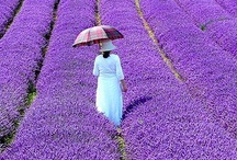 Lavender / by Donnie