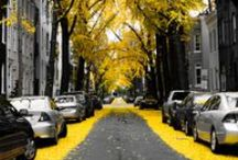 Colorsplash yellow / by Mel C