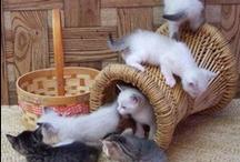 J D Kittens So Mischievous / by JoAnn Shoe Queen 1