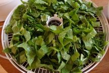 Dehydrating / Dehydrating / by Just a Prepper