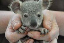 Australia / by Kelly Bothe