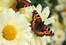 Butterflies / Butterflies and moths / by Bambi Golombisky