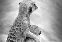 ANIMAL LOVE / by Coeli