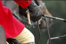 Equestrian stuff / by Linda Lowe