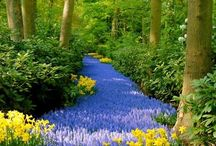 Eco garden / by Rachel Underwood