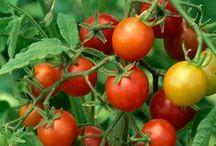 Huerta / Ideas, trucos y consejos para el cultivo de frutas y verduras / by Isabel León Robleda