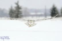 owls / by m flynn