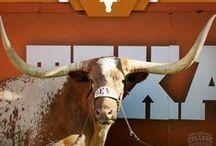 UT LONGHORNS & TX / by Jo Green