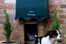 Pet stuff / Dream stuff for my pets include dog beds, dog treats, water & food bowls, cat & dog carries, cat & dog leads and collars.   / by Rhyanen Dunn
