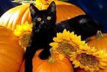 halloween! / by sara gusdal