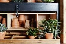 Plants and Gardening / by Yuliya Puzyrova