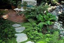 Garden Ideas / by shirlene philippus