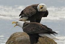 EAGLE / by John Maguire