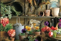 Garden Sheds & Potting Benches / by Darla Rigdon
