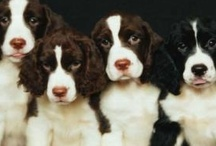 Precious Pups / Please pin (or 'like') only 10 - 15 of my pins per day - thank you / by Connie Lee