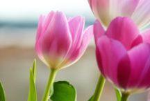 Flowers / by Alyssa Barcena