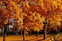 Trees / by Sandra Marie