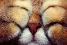 I Love Animals / by Suzanne Ennes