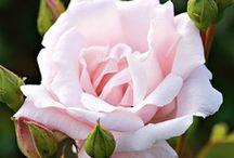 FLOWERS  6 / by Marsha Lingle