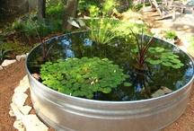 Garden Projects / by Lisa Baker