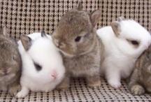 Rolling in Rabbits / by Pamela
