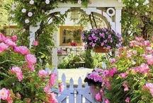 Gardening Inspiration / by Ali Ranson