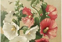 (Hollyhocks) / Everything beautiful impresses us as sufficient to itself. ~Henry David Thoreau~ / by Anne Comer