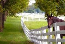 Horses, Kentucky Style / by Kentucky Tourism