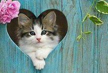 #WeLoveCats / by AnimalBehaviorC