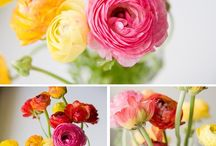 Flowers, Flowers and Flowers!!! / by Paola Brambilla