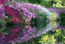 Garden Ideas / by Cheryl Borst
