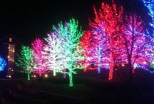 christmas lights! / by Terri Lea Worthington