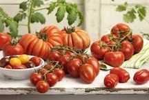 'maters / by Patricia Hinson