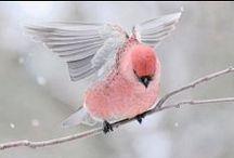 Birds __ Pássaros / by Jurema Ribeiro
