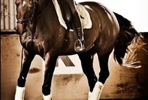 EQUESTRIAN SPORT / Horse sports involving Dressage ,Showjumping ,and Eventing.Training/Coaching. / by Melanie Byrne