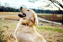 Goldens / by Kate Tisdale