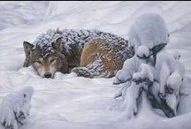 Animals / by Varney Vagnaröck