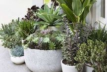 Succulents & California Natives - Low water gardening for beautiful conservationist yards and gardens! / Drought-resistant landscaping ideas and succulents / by Lavende and Lemonade