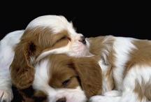 Pups N Kitties / by Shara Koplowitz For O.P.E.N.
