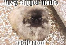 LOL | Animals | Funny Creatures / Happiness and silliness with cuddly creatures and friends. Animal funnies photos memes and humor.  Grumpy Cat  Phsteven and other funny or awkward animals included!! / by BETTY CHIN-WU