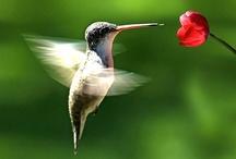 AVES  ☣ / Quedarás fascinado con esta hermosa colección de fotos de aves, hemos seleccionado aves de diferentes tipos, lo más bello y destacado de ellas y su maravilloso colorido digno de admirar, obra maestra de la naturaleza y del artista que las capto con su maravilloso lente. Si eres un coleccionista con seguridad quedaras maravillado, esperamos las disfruten. / by LISYSER DENK