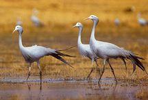 Birds South Africa / by Hannelie Kotze