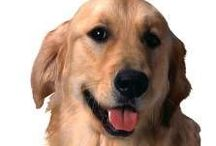 Furry Family Members / Info and resources on the best way to take care of our furry family members  / by Deborah Lynn Kunesh