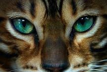 Here Kitty, Kitty, Kitty... / by Tara Lain