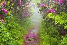 Enchanting Pathways / by Deborah Walker