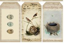 Design Ideas / by Botanic Bleu