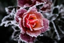 Ice / by Sherry Soetaert