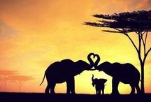 L-A-FUNTS / #Elephants / by Katie