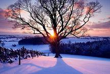Winter Wonderland ❄️ / by Lucie Maltais